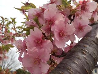 春のスプリングキャンペーン残り数日! | マドリッド音楽教室